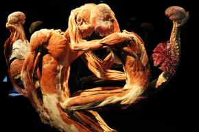 © Gunther von Hagens' BODY WORLDS, Institute for Plastination, Heidelberg, Germany. http://www.bodyworlds.com