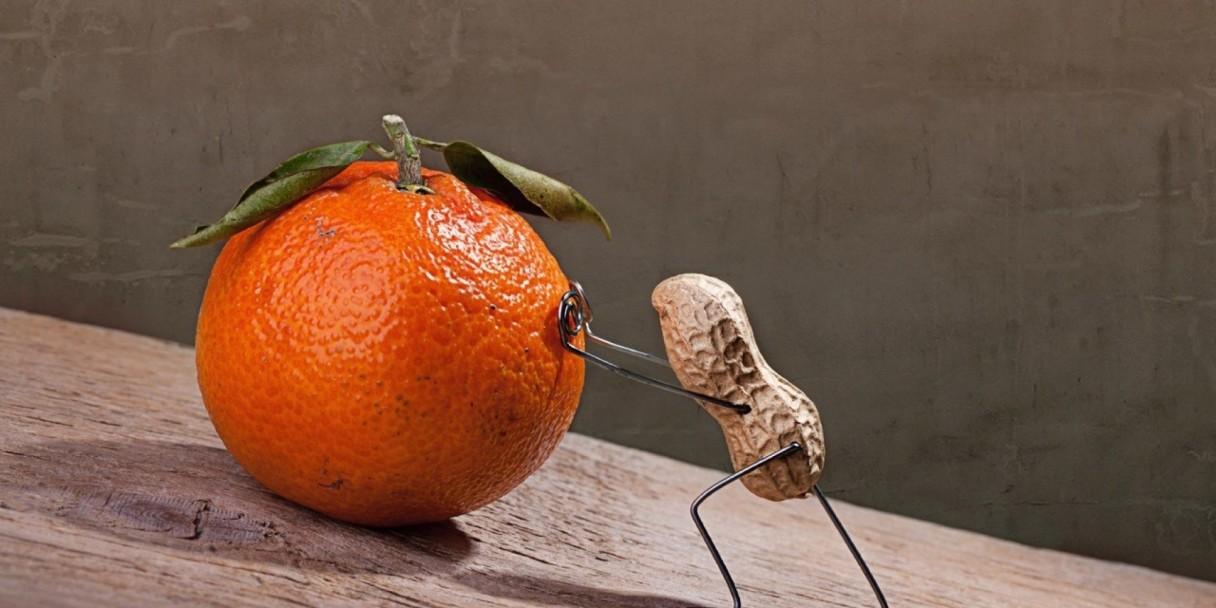 sisyphus peanut brain and bitter fruit
